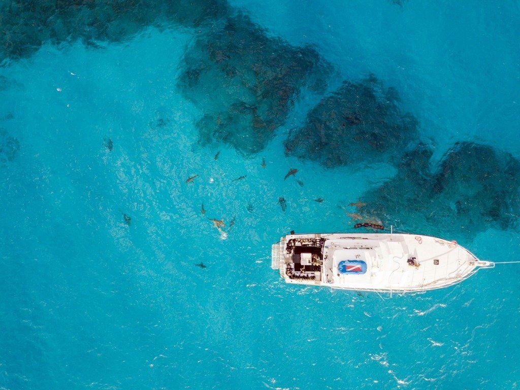 sharks in bahamas
