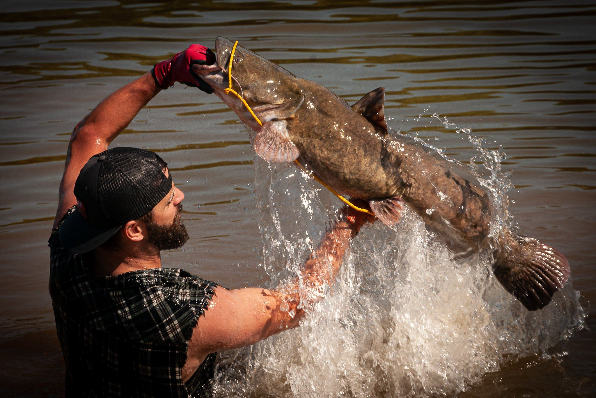 how to go catfish noodling